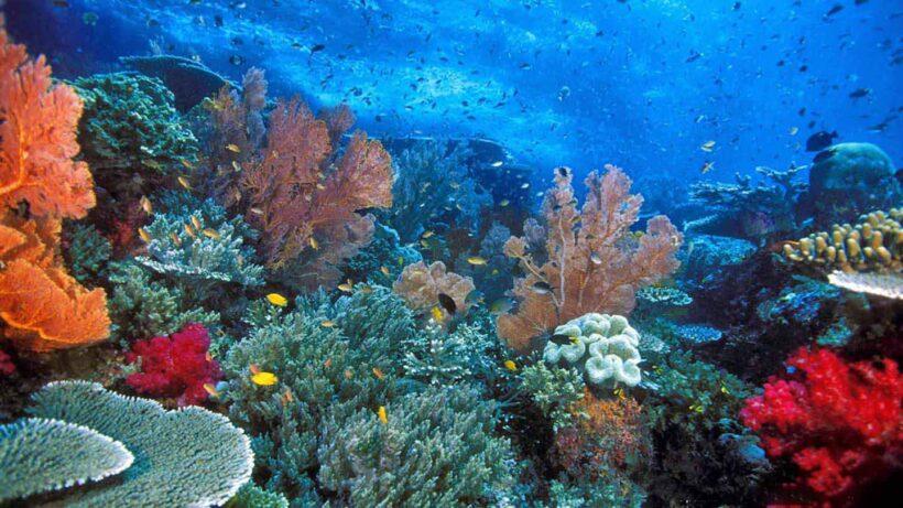 Discover Scuba Diving from EL Gouna