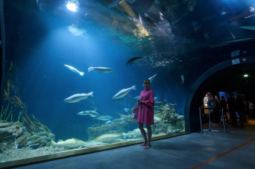 Oceanarium w Straslundzie